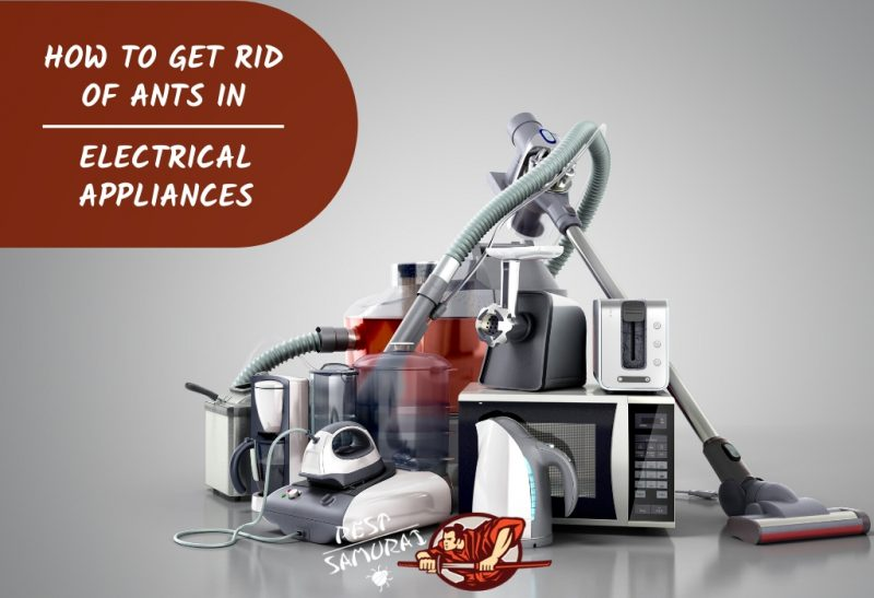 How to Get Rid of Ants in Electrical Appliances Tips and Guide