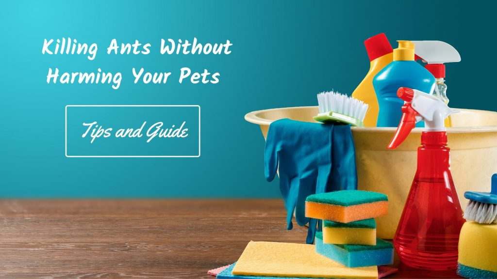 Killing Ants Without Harming Your Pets - Tips and Guide