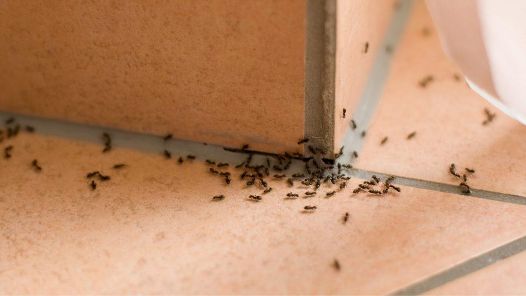 Ant Exterminator Cost