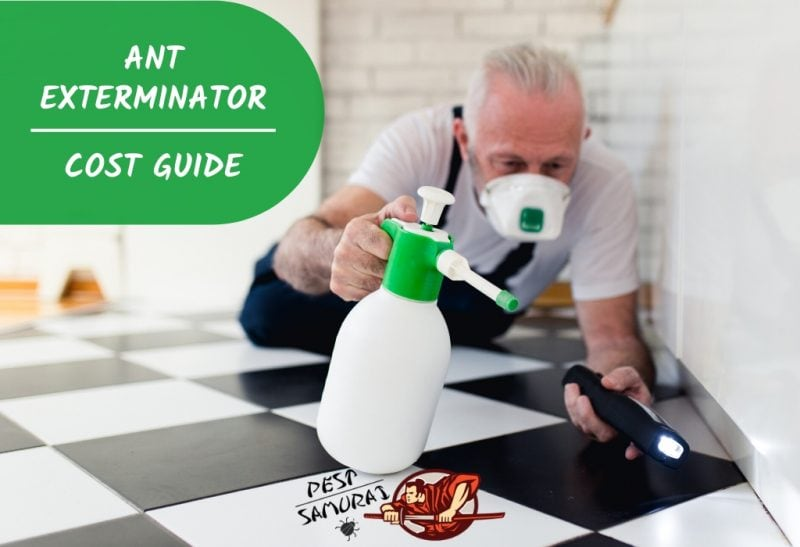 Ant Exterminator Cost Ant Treatment Price Guide