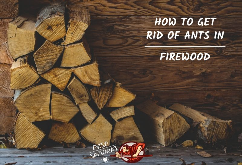 How To Get Rid Of Ants In Firewood A Complete Guide