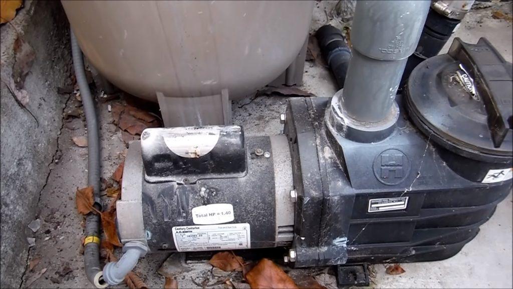 Ants in Pool Pump Motor