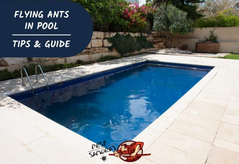 Flying Ants in Pool