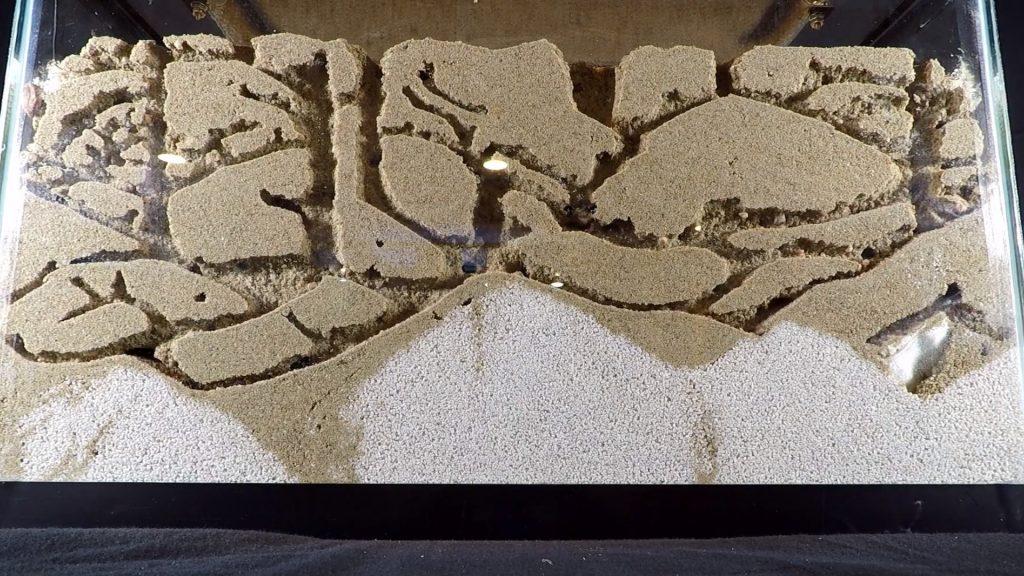 ¿Cuánto tiempo viven las hormigas en una granja de hormigas?