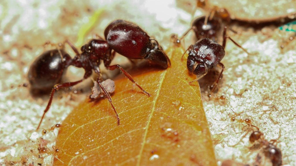 How to Get Rid of Harvester Ants – Step by Step Instructions