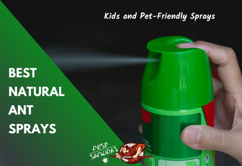 Natural Ant Sprays