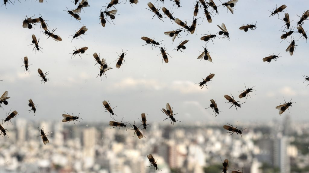 Types of Flying Ants in Pool