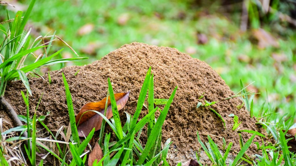 How to Get Rid of Ant Hills Naturally – Natural Ant Hill Killers