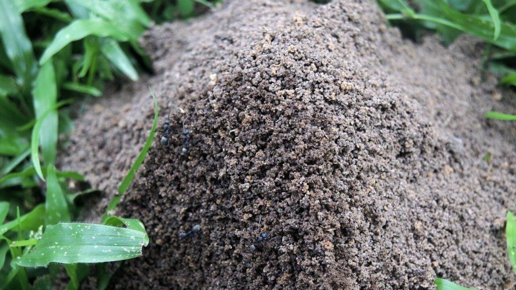 How to Get Rid of Large Ant Hills