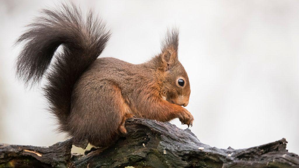 Alternative Ways to Get Rid of Squirrels