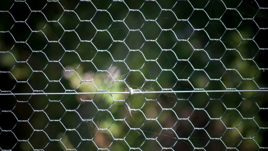 Chicken Wire for Squirrel Control