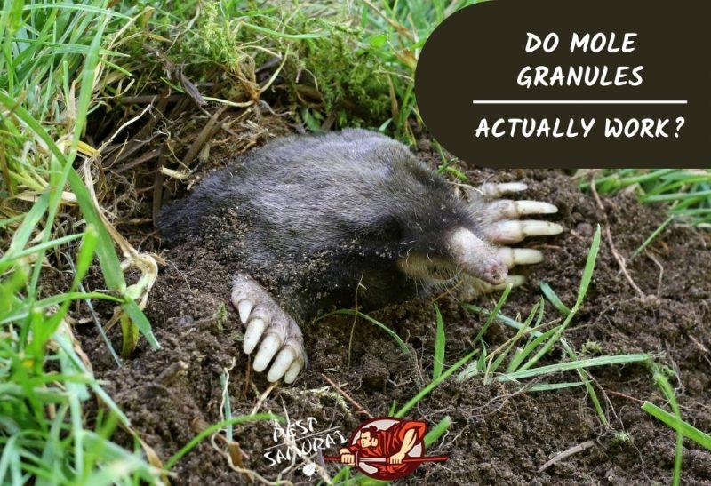 Do Mole Granules Actually Work