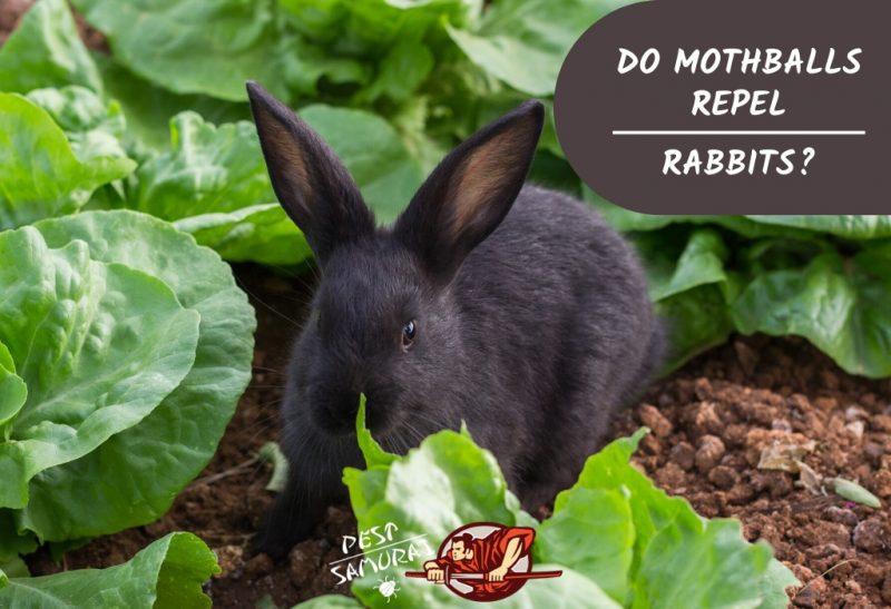 Do Mothballs Repel Rabbits