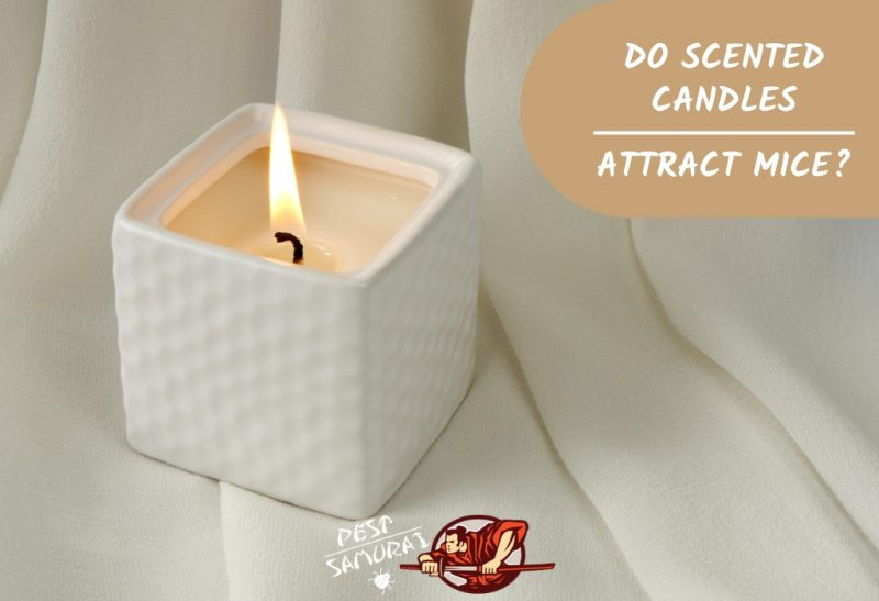 Do Scented Candles Attract Mice