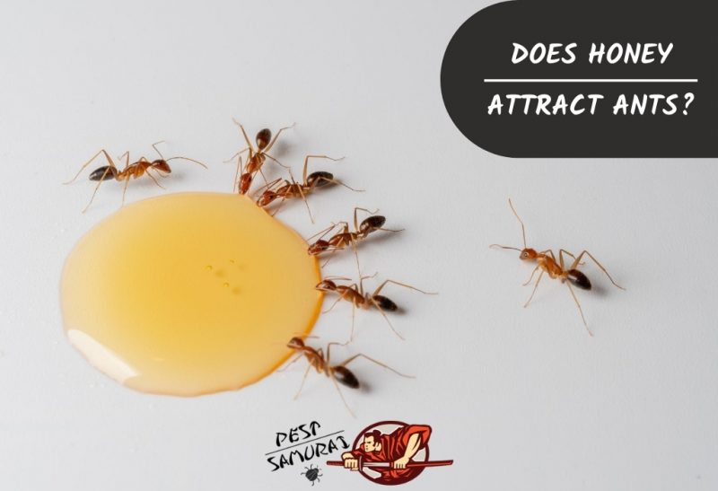 Does Honey Attract Ants