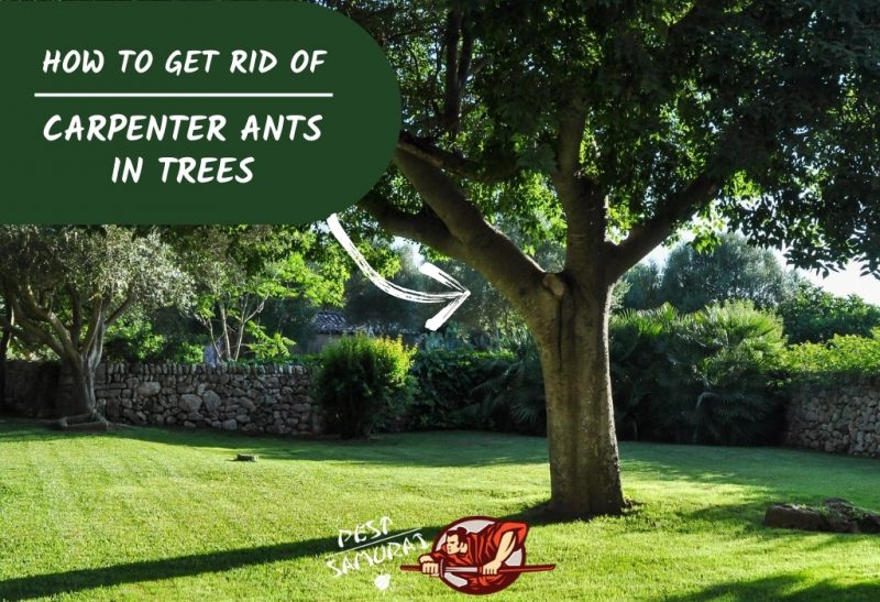 How to Get Rid of Carpenter Ants in Trees