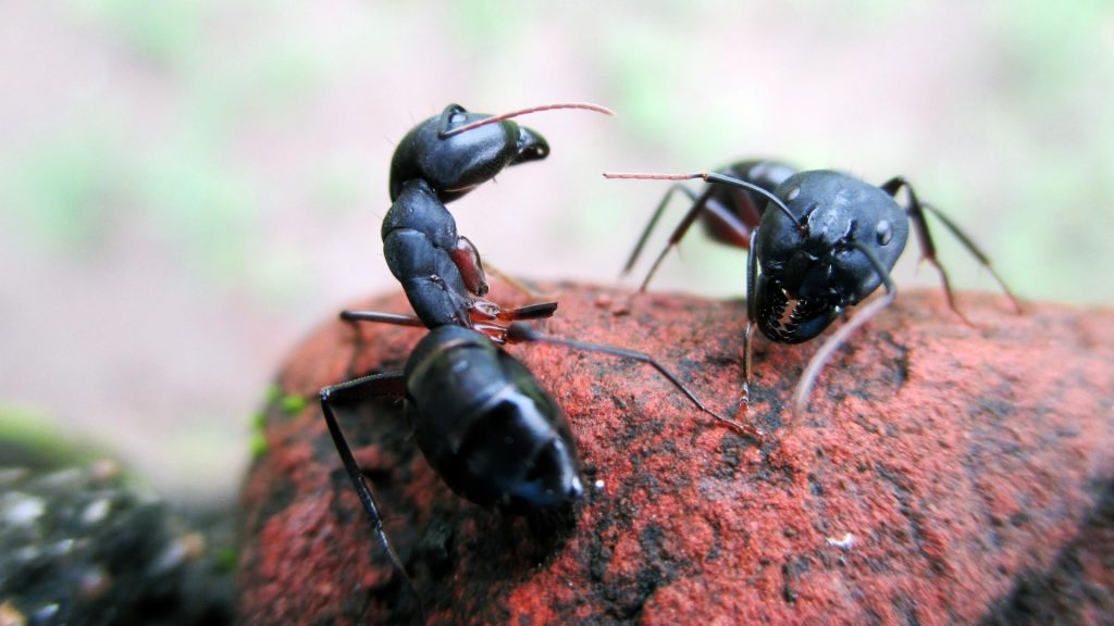 How to Recognize a Carpenter Ants Infestation on Trees