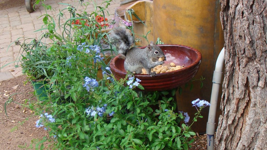 Other Ways to Keep Squirrels Out of Gardens