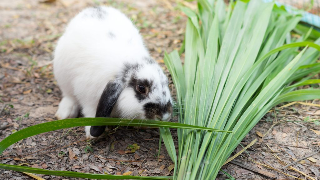 Signs That Indicate Presence of Rabbits in Gardens