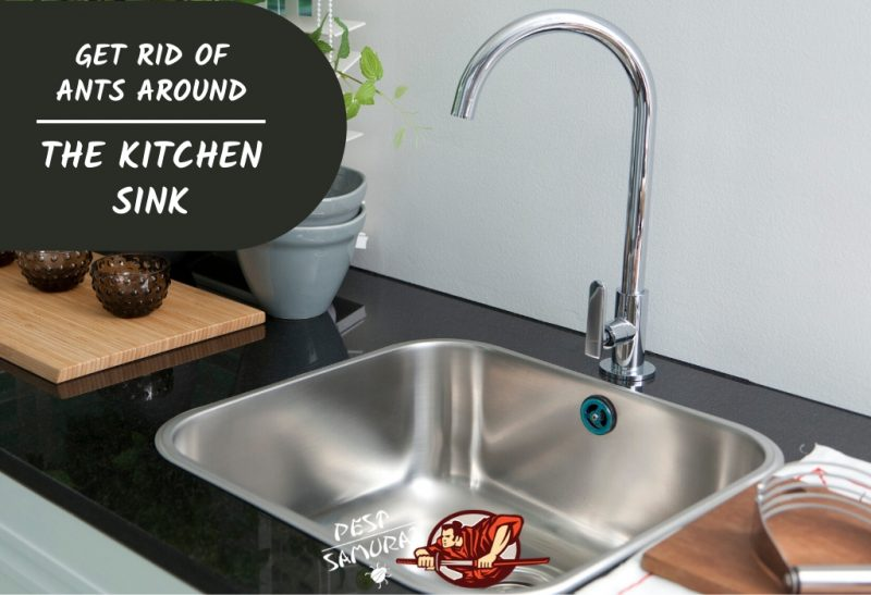 How To Get Rid Of Ants Around The Kitchen Sink Tips Guide Pest Samurai