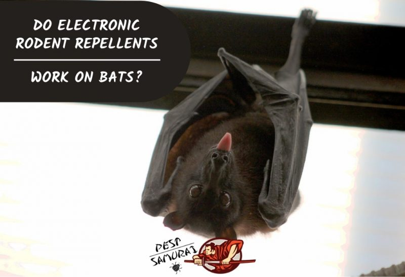 Do Electronic Rodent Repellents Work on Bats