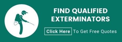 Exterminators