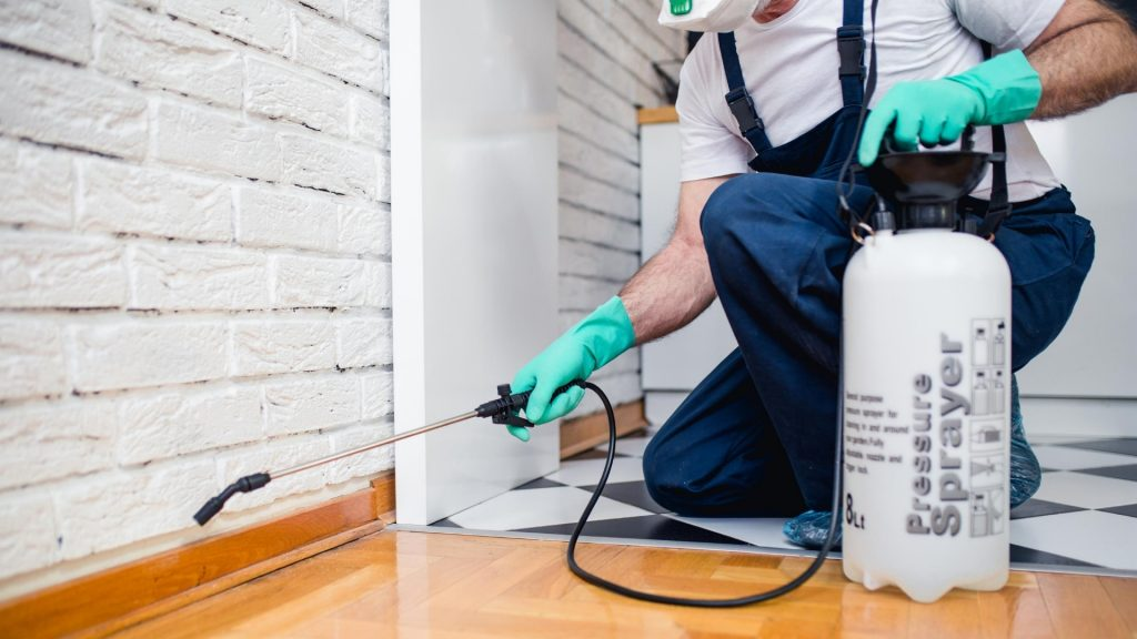 Getting Rid of Odorous House Ants