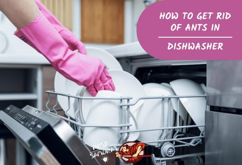How to Get Rid of Ants in Dishwasher