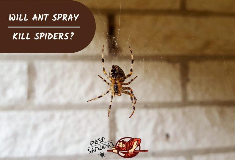 Will Ant Spray Kill Spiders