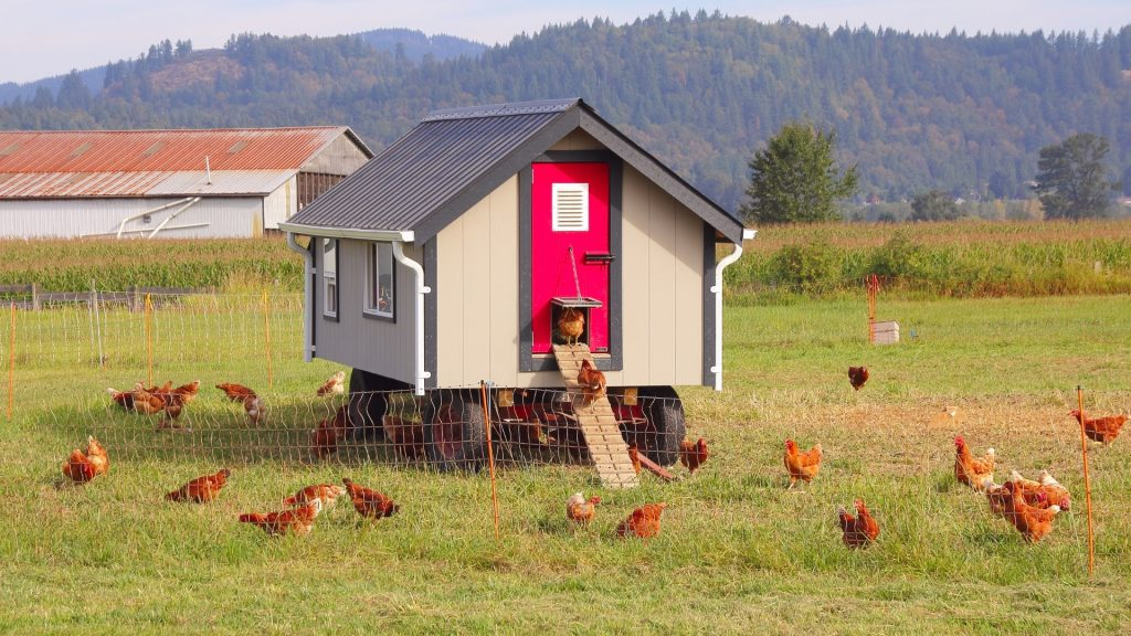Ant Control In Chicken Coop