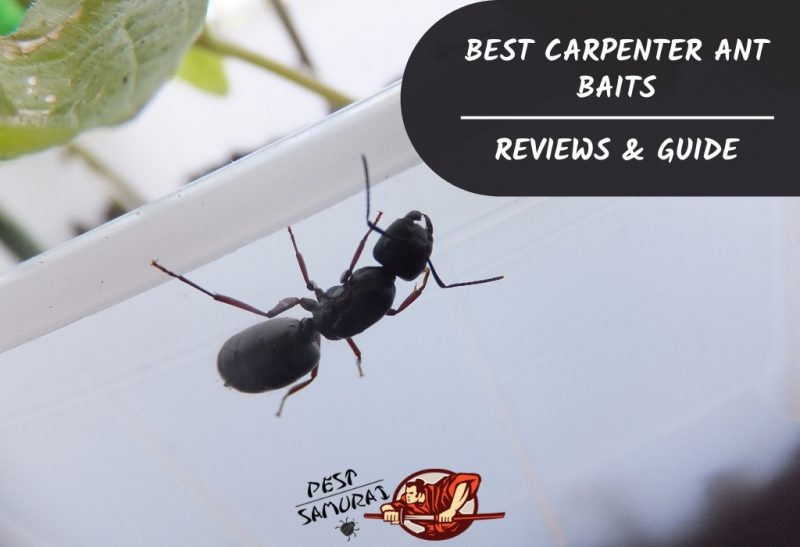 Best Carpenter Ant Baits Reviews & Guide