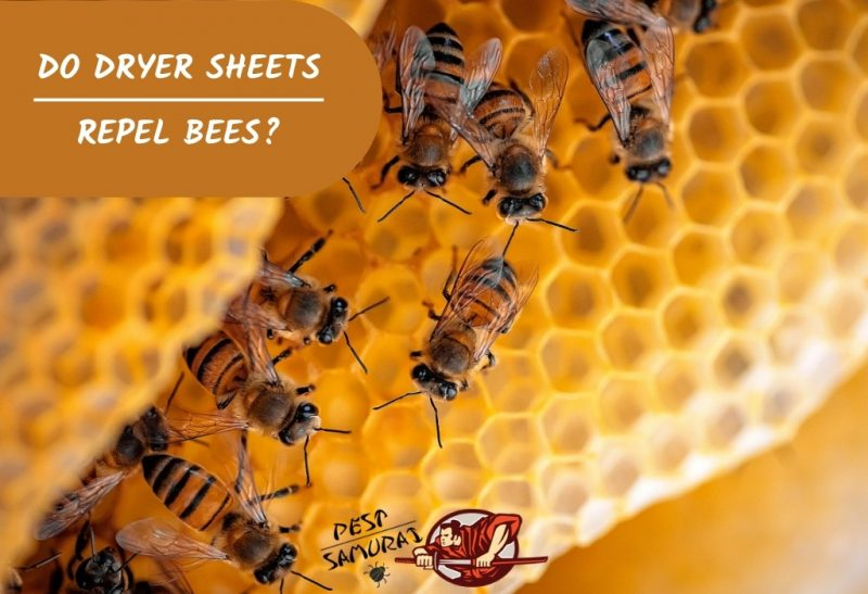 Do Dryer Sheets Repel Bees