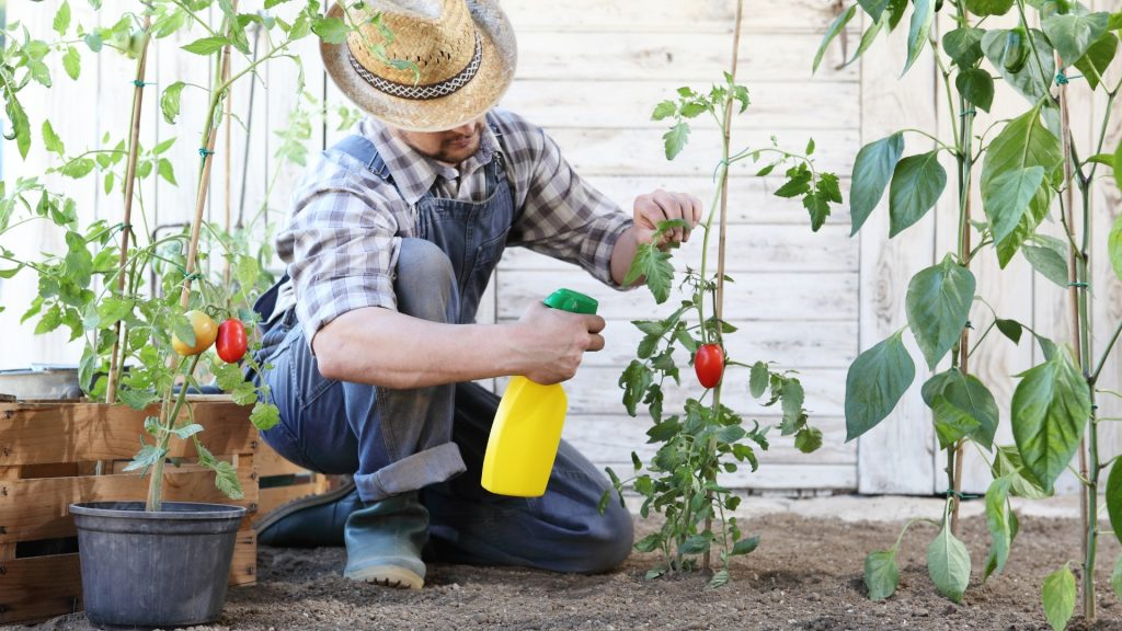 Organic Ant Control in Vegetable Garden