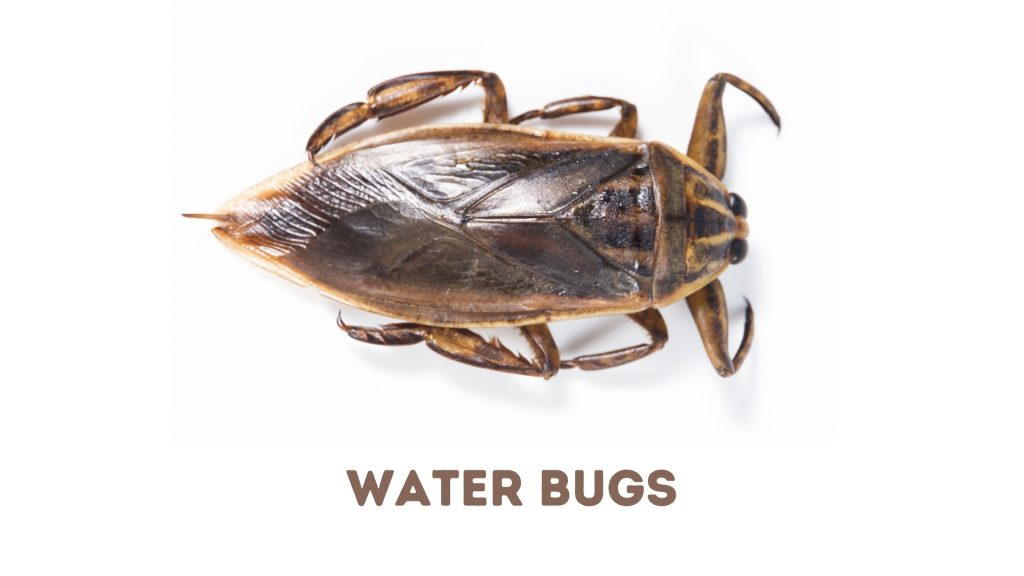 Cockroaches vs. Water Bugs