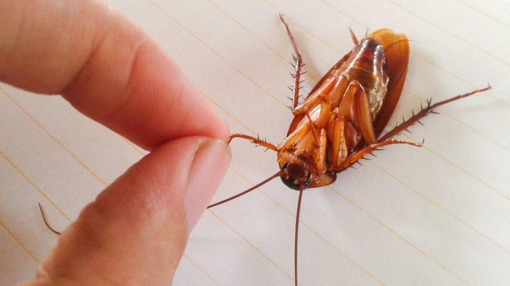 Are Cockroach Bites Dangerous
