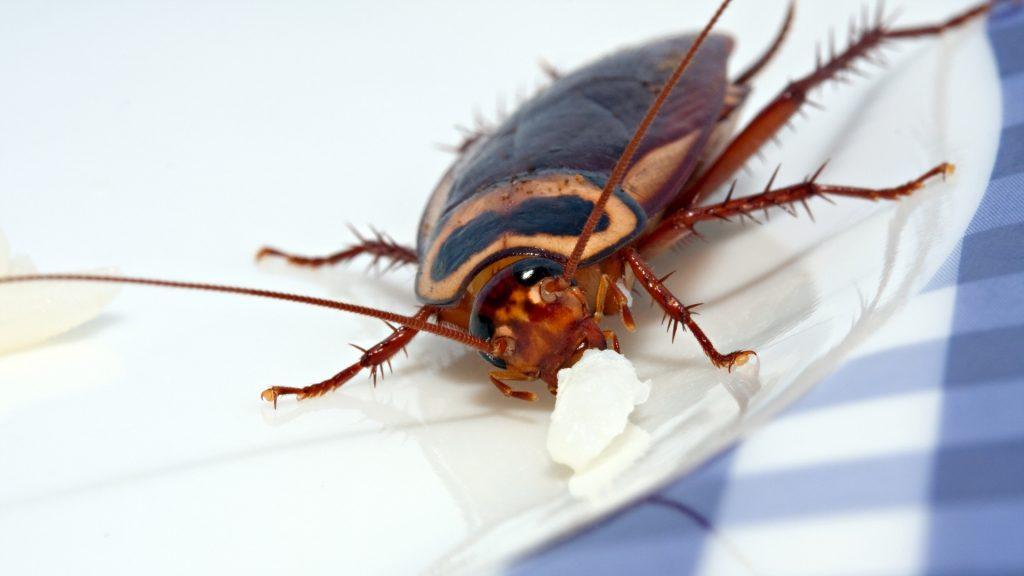 Cockroach Bite