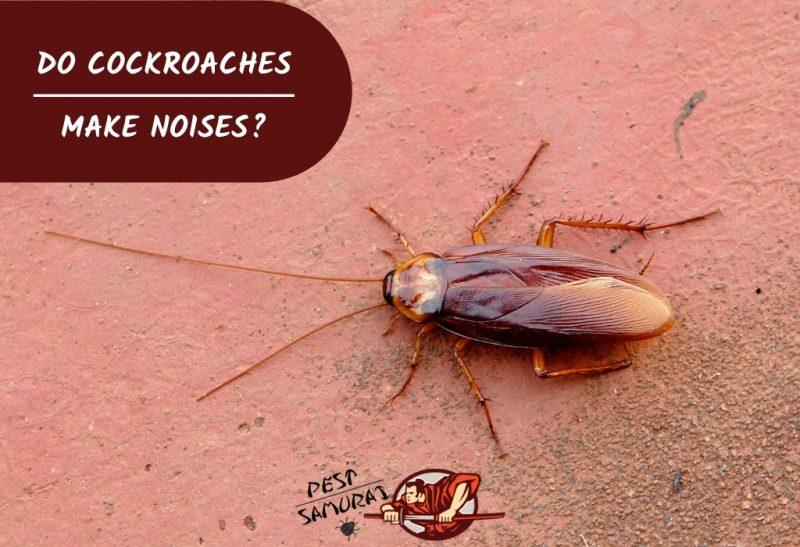 Do Cockroaches Make Noises