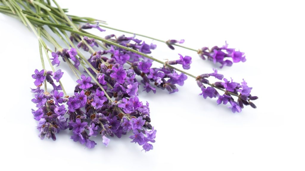 Does Lavender Attract Cockroaches