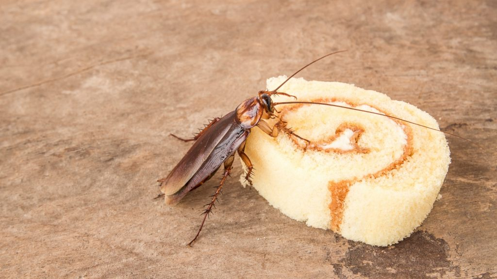 What Food Attracts Cockroaches