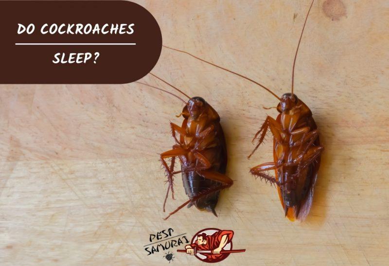 Do Cockroaches Sleep