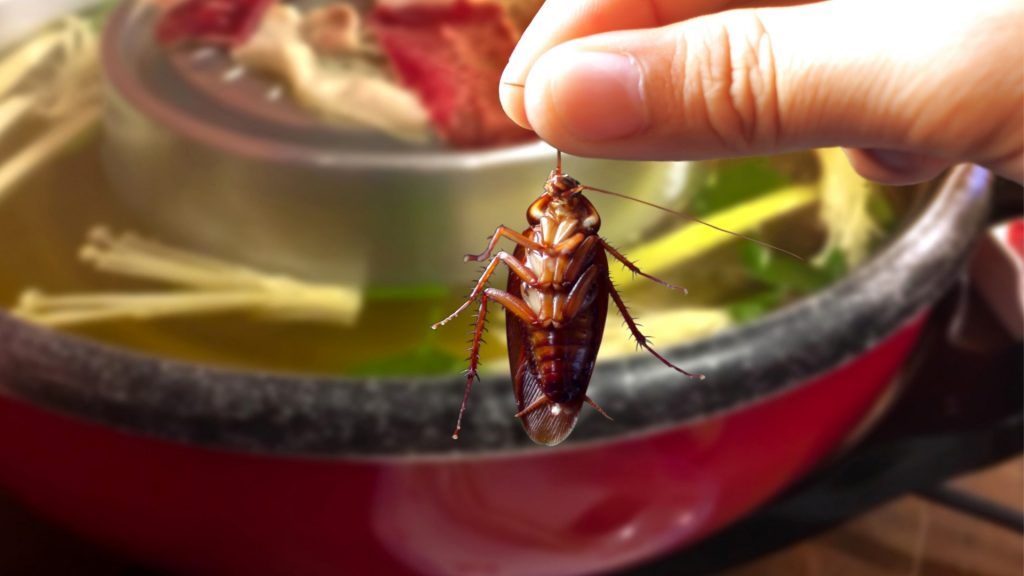 How to Get Rid of Baby Cockroach in Food