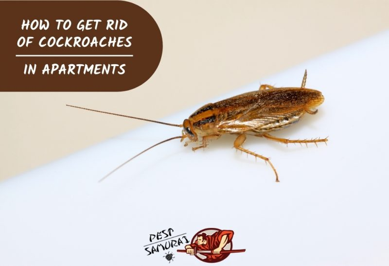 How to Get Rid of Cockroaches in Apartments