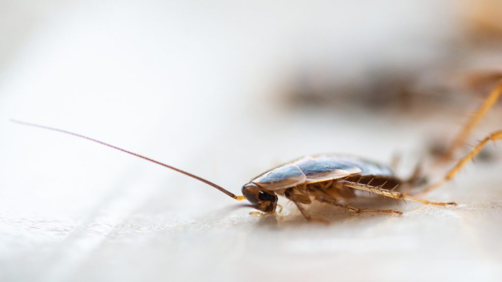What Causes Cockroaches in Apartments