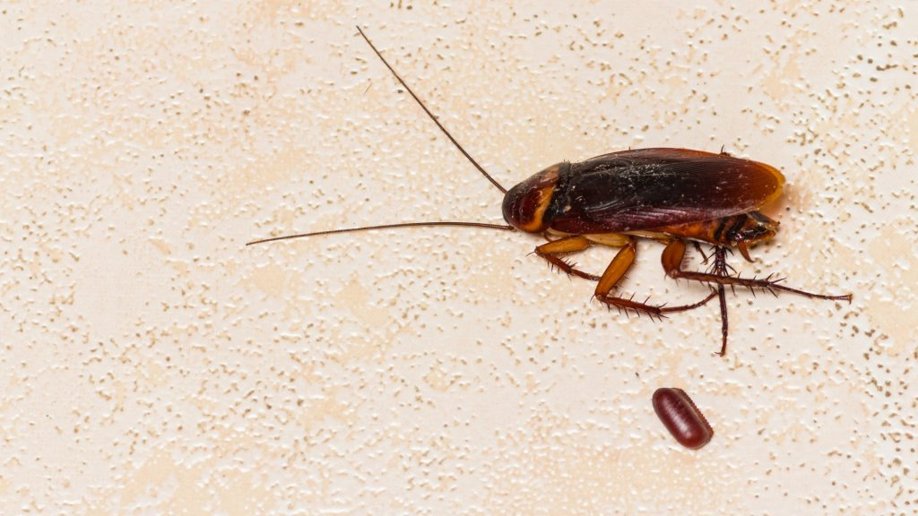 Does Cockroach Egg Survive Without Food