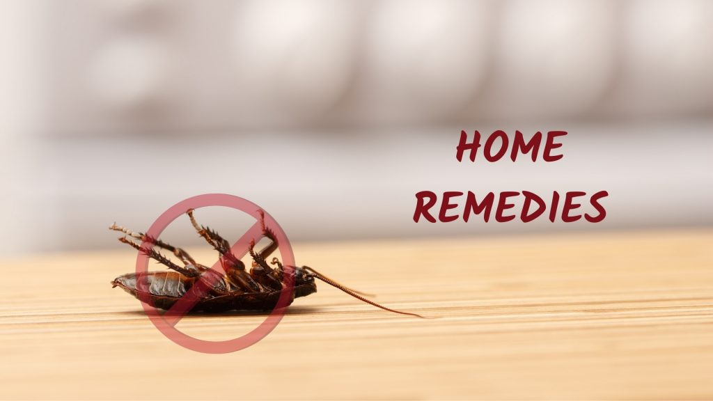 Home Remedies for Cockroaches