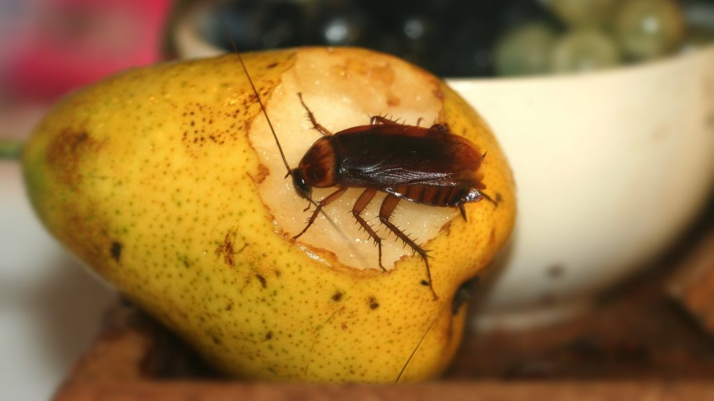 What Fruits and Vegetables Do Cockroaches Hate