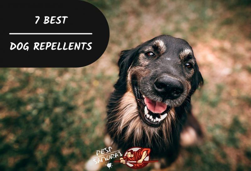 7 Best Dog Repellents
