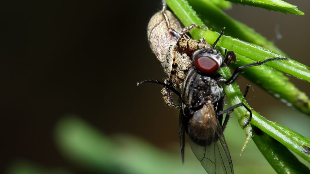 Are Spiders Carnivores or Herbivores
