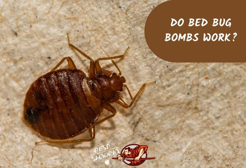 Do Bed Bug Bombs Work