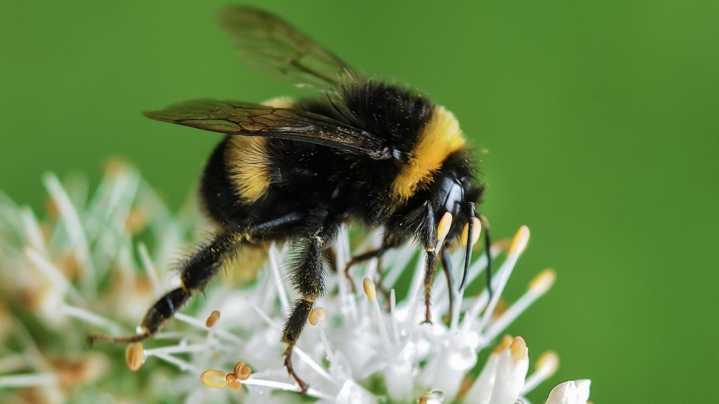 How Many Legs Does a Bumblebee Have